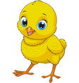 little funny chicken vector image