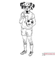 dalmatian football player sport and outdoor vector image
