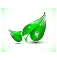 Green leaves with droplets vector image vector image