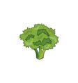 color broccoli icon vector image