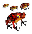 growth stage red poisonous frogs isolated vector image vector image