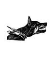 hand draw n doberman dog vintage vector image vector image