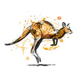 Colored hand sketch leaping kangaroo vector image vector image