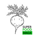 icon superfood maca vector image vector image