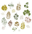 imprint of different leaves on a white background vector image vector image