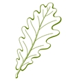 leaf of oak tree vector vector image vector image