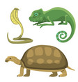reptile and amphibian colorful fauna vector image vector image