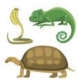 reptile and amphibian colorful fauna vector image