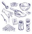 sketch sea salt hand drawn spice seasoning vector image