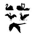 Swan silhouettes vector image vector image