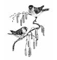 Birds on twig sketch vector image
