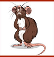 brown rat vector image vector image