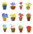 collection of flowers planted in ceramic pots for vector image