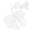 contour of oak leaves vector image