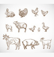 hand drawn domestic animals set a collection vector image