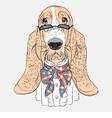 hipster dog Basset Hound breed vector image
