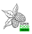 icon superfood noni vector image vector image