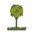 orange tree in garden vector image vector image