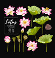 set lotus flowers and leaves vector image