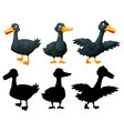 set of black duck on white backgroung vector image