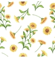 Watercolor seamless pattern with calendula vector image vector image