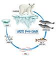 arctic food chain diagram concept