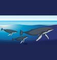fin whale deep underwater vector image vector image
