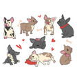 french bulldog funny pet puppy in different pose vector image