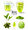 green tea iced set vector image vector image
