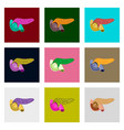 icons set in flat style human organ duodenum and vector image