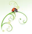 ladybird curves vector image