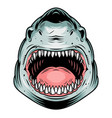 colorful aggressive shark head concept vector image