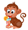 funny lovely monkey drink with fruit juice vector image