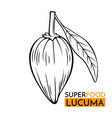 icon superfood lucuma vector image vector image