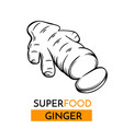 icon superfood ginger vector image vector image
