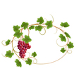 Red grape vine vector image