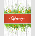 spring banner with blooming chamomile vector image vector image