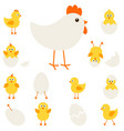 chickens with hen vector image vector image