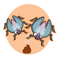 fly on a poo vector image vector image