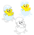 Hatched Chick vector image