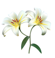 Holiday background with two white lilies vector image