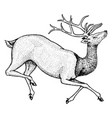 soaring deer wild animal jumping horned mammal vector image