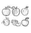 apple fruit set line art sketch vector image vector image