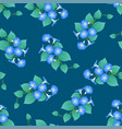 blue morning glory on green teal background vector image vector image