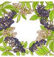 elderberry branch frame vector image vector image
