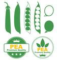 Pea vector image vector image