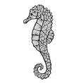 Stylized sea horse zentangle vector image