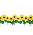 sunflowers border seamless blooming sunflowers vector image
