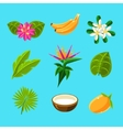 Tropical Plants And Fruits Collection vector image