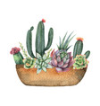 watercolor composition of cacti and vector image
